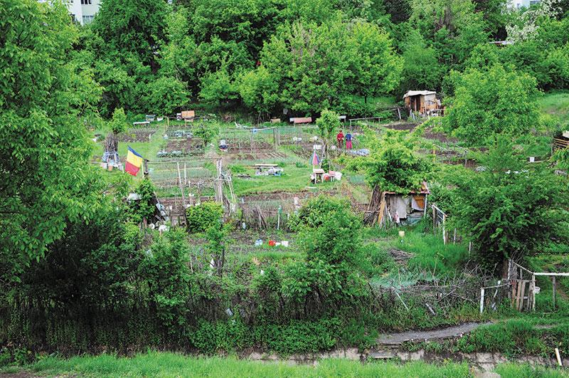 Grădini în Mănăștu