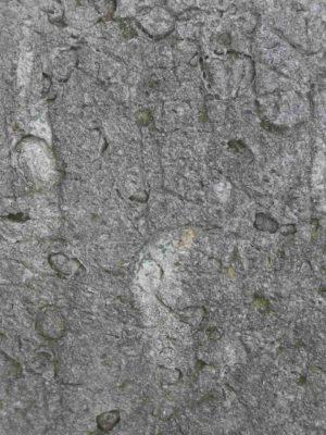 Fig. 3 Detaliu de structură a rocilor calcaroase de tip sarmatic, întâlnită în cimitirul din Dealul Istriţei; Greceanca, Buzău;