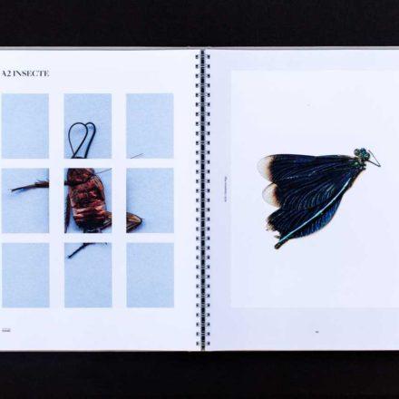 Alice Voinea - Graphic Design